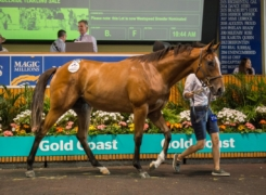 Superior filly sold by Darling View